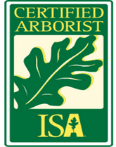 ISA-Certified Tree Workers